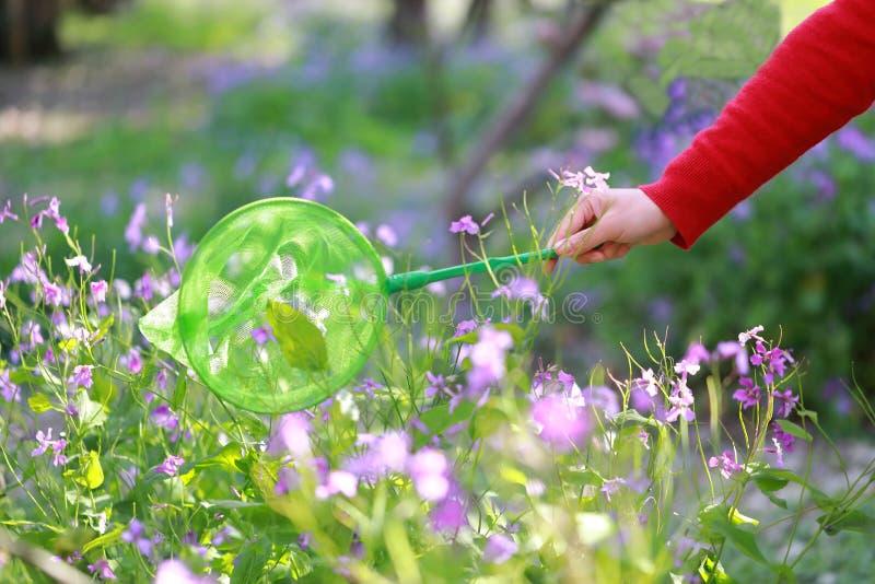 Um bolso da rede do verde da posse da menina da mulher para travar a flor roxa dos insetos no parque da mola do verão exterior em foto de stock