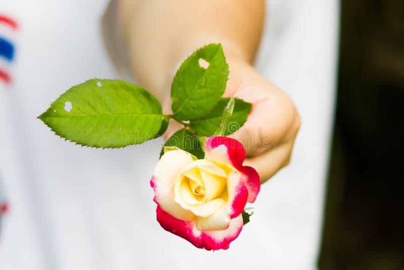 Um bonito aumentou com mãos da mulher fotos de stock royalty free