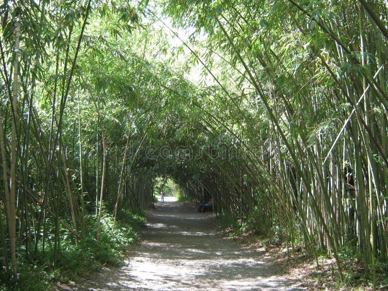 Um bosque de bambu em Sukhumi, a Abkhásia fotos de stock