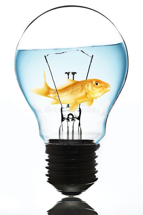Um bulbo com peixe dourado para dentro imagem de stock