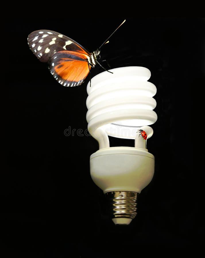 Um bulbo eco-friendly de CFL com borboleta & erro da senhora imagens de stock royalty free