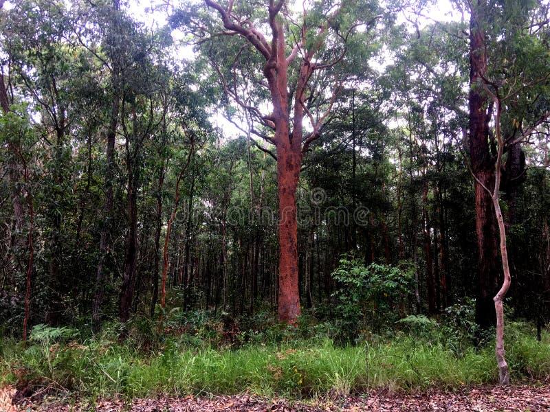 Um bushland australiano alto luxúria fotos de stock