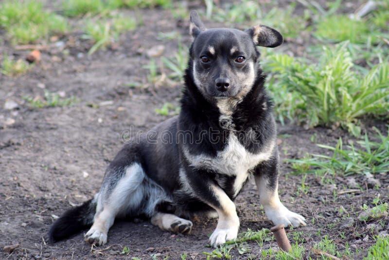 Um cão alegre em uma caminhada fotos de stock royalty free