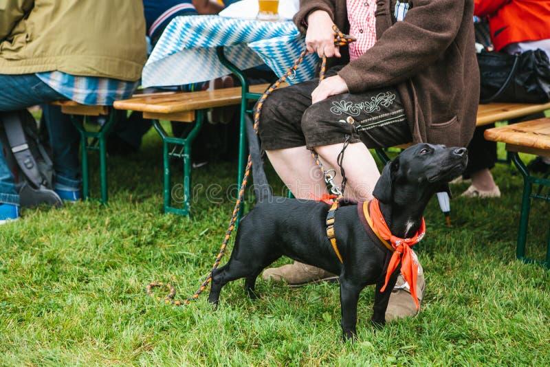 Um cão ao lado do proprietário em um festival tradicional em Alemanha Amizade entre o homem e o animal fotos de stock royalty free