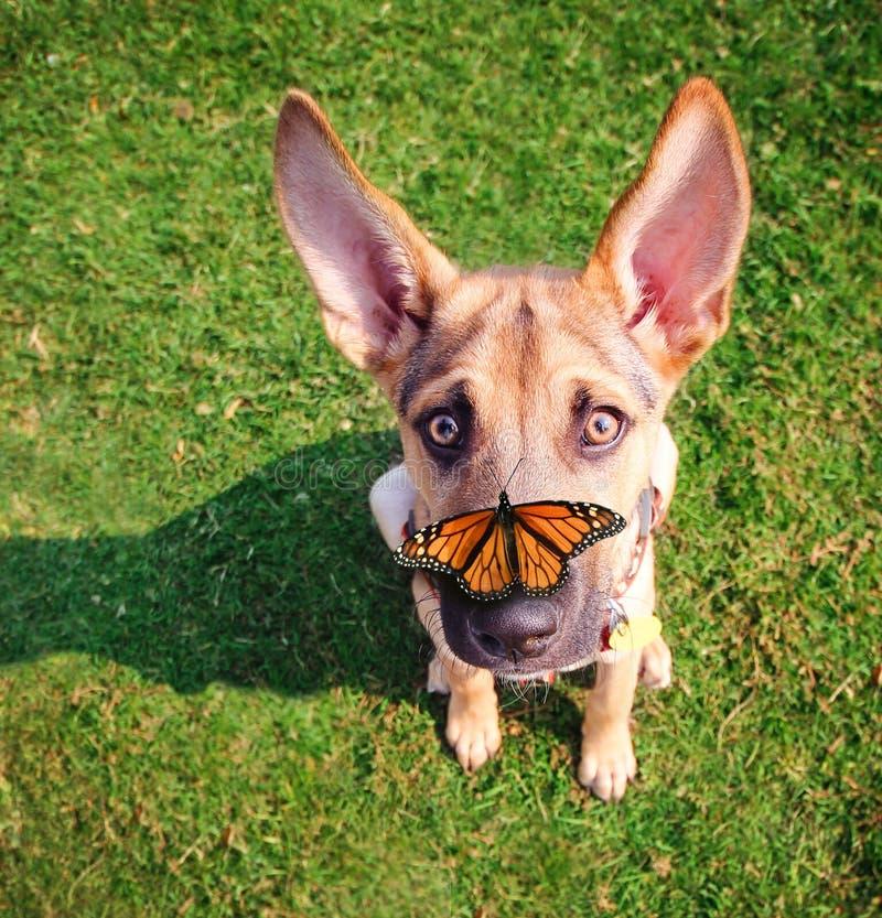 Um cão bonito na grama em um parque durante o verão com um butterfl foto de stock royalty free