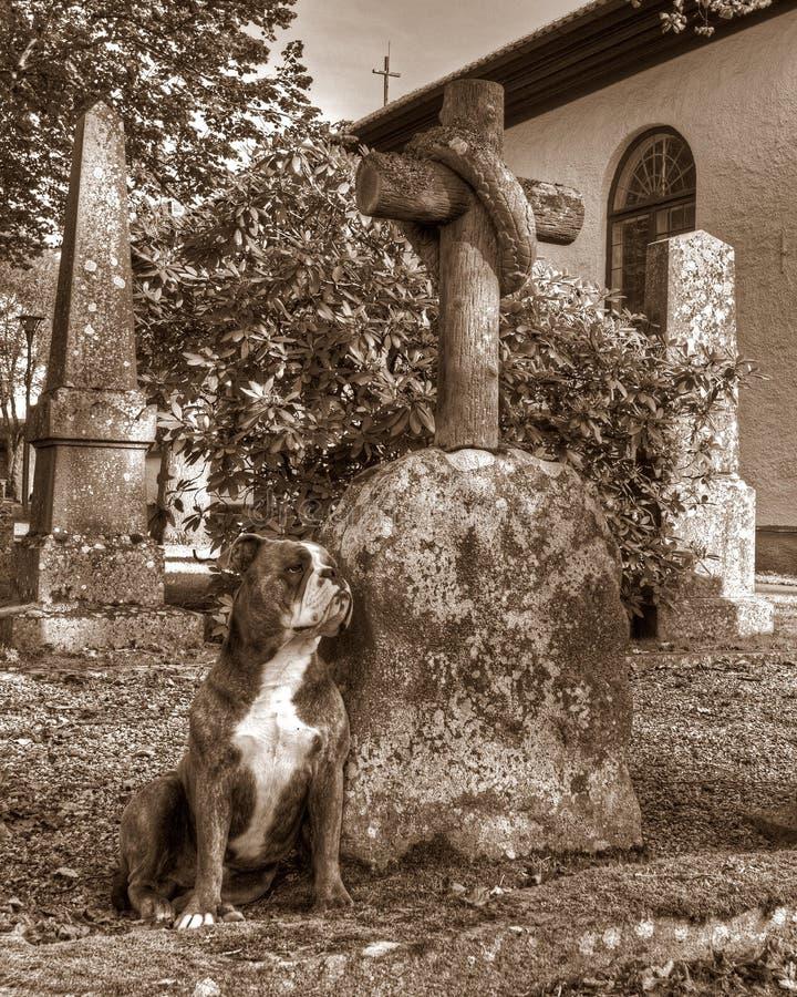 Um cão com um protetor do coração quebrado a sepultura em HDR e no estilo retro fotografia de stock