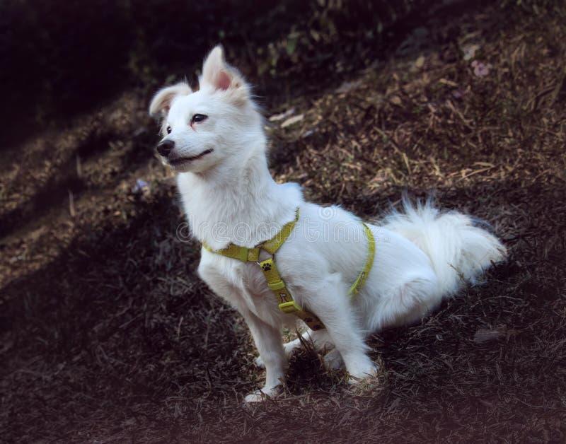 Um cão da beleza imagem de stock