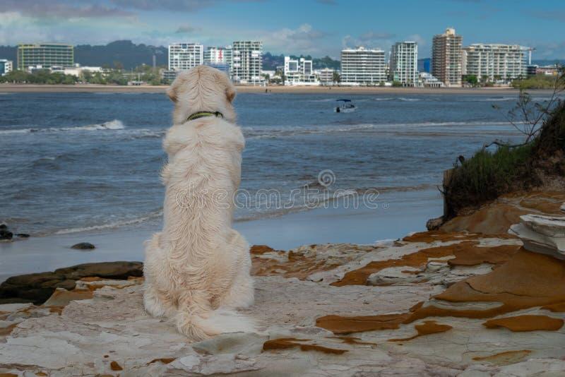 Um cão de cachorrinho do golden retriever olha para fora sobre uma vista para o mar agradável imagens de stock