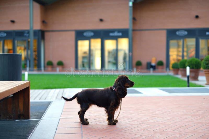 Um cão de espera fotografia de stock