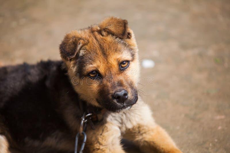 Um cão de estimação fotografia de stock