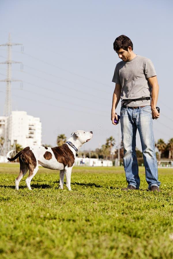 Download Pitbull E Proprietário Do Cão Foto de Stock - Imagem de animal, cão: 29829262
