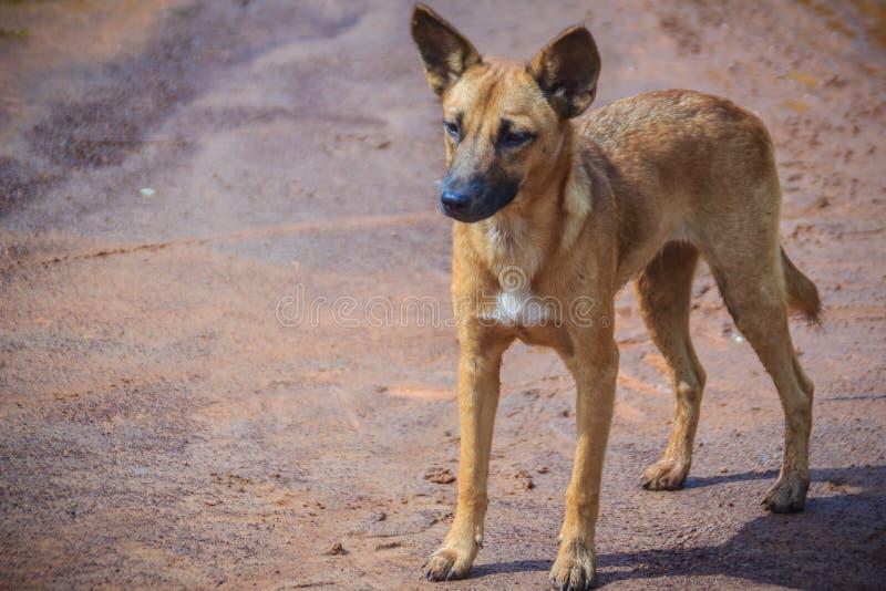 Um cão disperso abandonado, desabrigado está estando na rua Litt imagem de stock