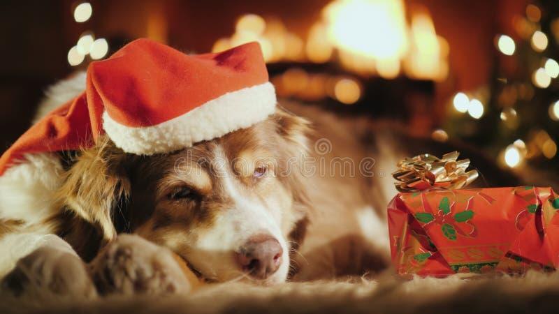 Um cão doce está dormindo perto de seu presente de Natal, no fundo está uma árvore de Natal e um fogo está queimando-se no fotografia de stock