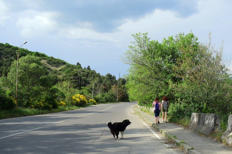 Um cão e duas meninas do viajante andam ao longo da estrada do céu azul, as nuvens brancas e flores e plantas bonitas foto de stock