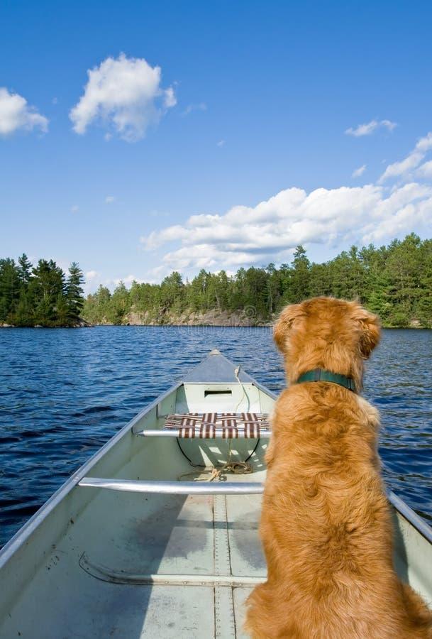 Um cão em sua canoa. fotos de stock