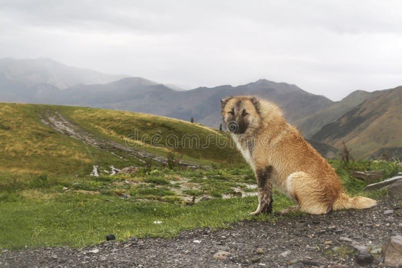 Um cão em um fundo das montanhas em Geórgia imagens de stock royalty free