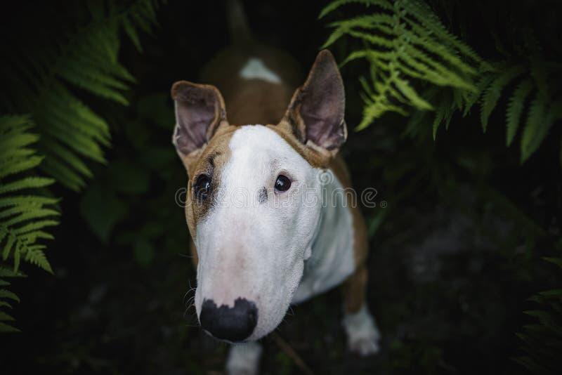 Um cão em uma floresta misteriosa imagens de stock royalty free
