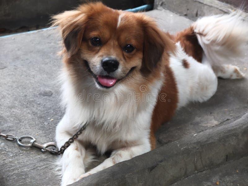 Um cão esperto está sorrindo fotografia de stock