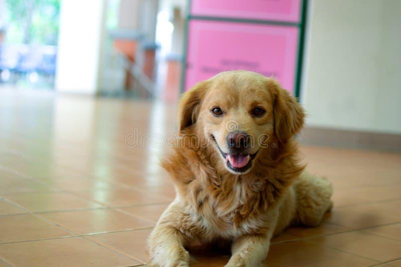 Um cão feliz com sorriso foto de stock