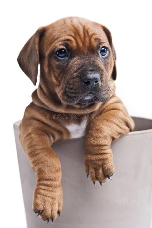 Um cão feliz no fundo branco fotografia de stock