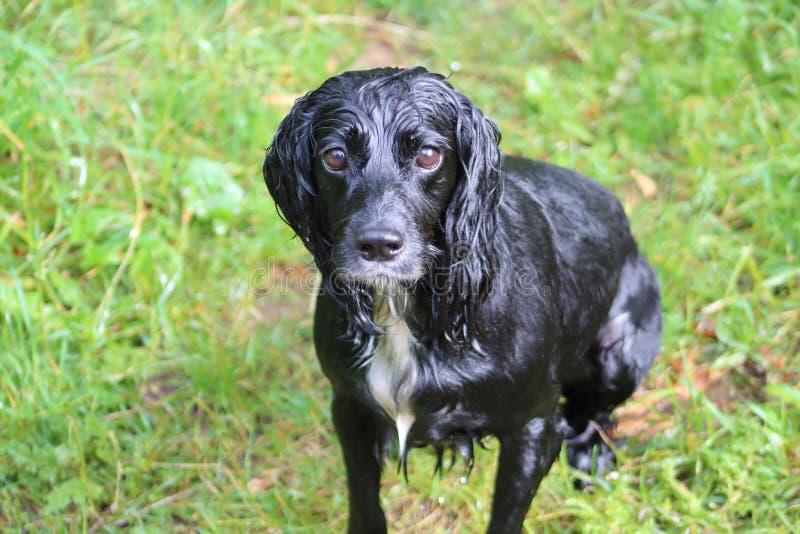 Um cão molhado feliz imagens de stock