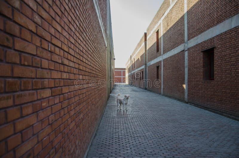 Um cão na aleia fotografia de stock