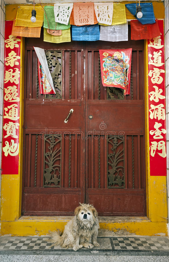 Um cão na frente dos dísticos chineses foto de stock