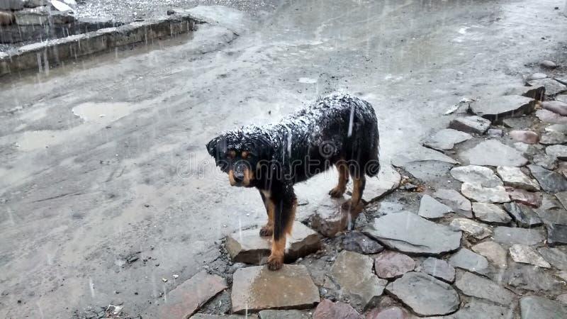 Um cão na queda de neve foto de stock