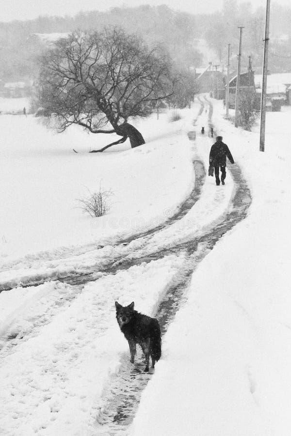Um cão na rua do inverno com uma silhueta do homem fotografia de stock