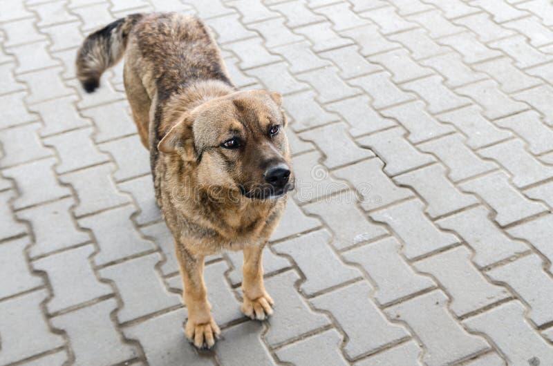 Um cão na rua fotos de stock