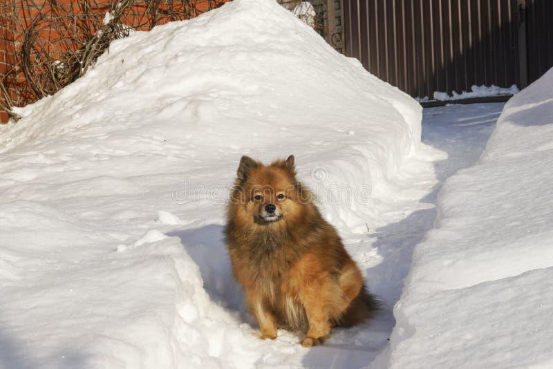 Um cão na rua Melhor amigo do ` s do homem Caminhadas na natureza Animal bonito imagem de stock