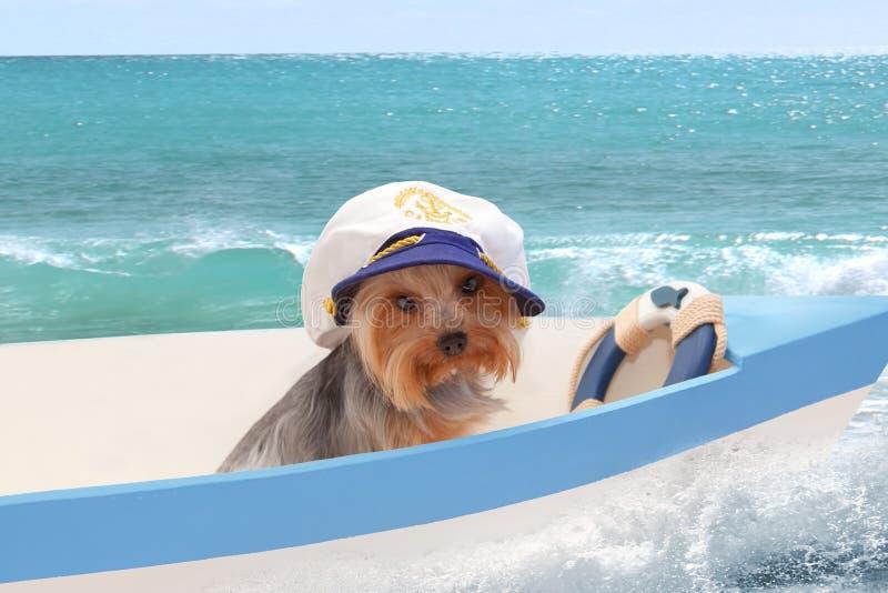 Um cão no tampão de um capitão senta-se em um barco contra o mar fotografia de stock