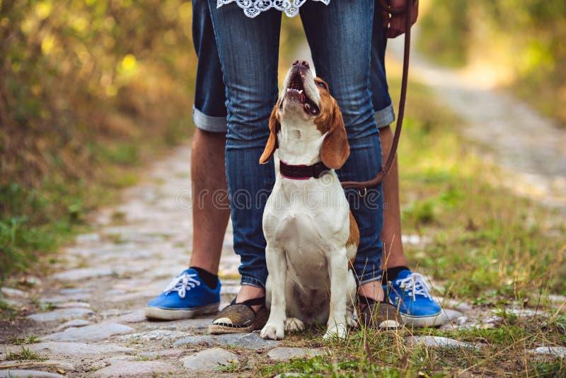 Um cão novo bonito está olhando acima foto de stock