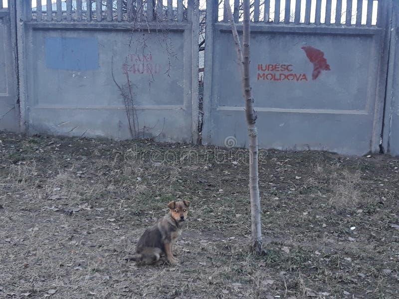 Um cão pequeno pequeno bonito mas saido imagens de stock