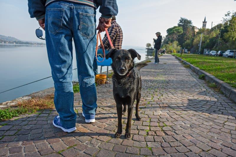 Um cão pequeno curioso olha-nos quando seu proprietário observar o fisher fotos de stock