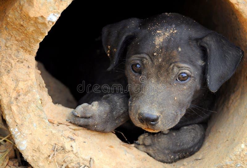Um cão pequeno sujo impertinente fotos de stock royalty free