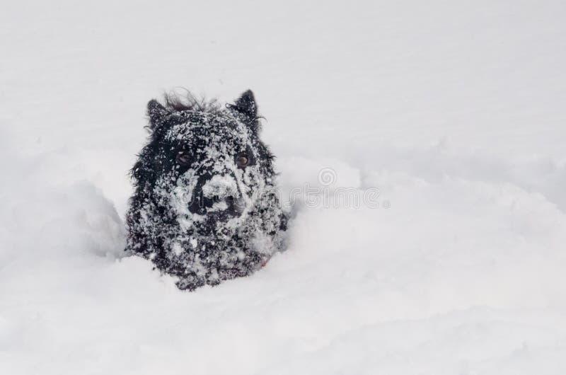 Um cão preto na neve engraçada foto de stock royalty free