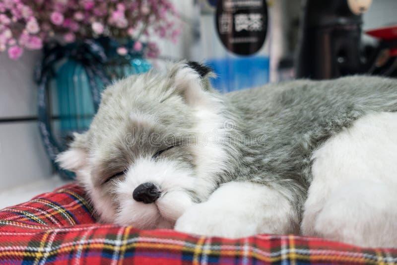 Um cão que durma em uma esteira fotos de stock