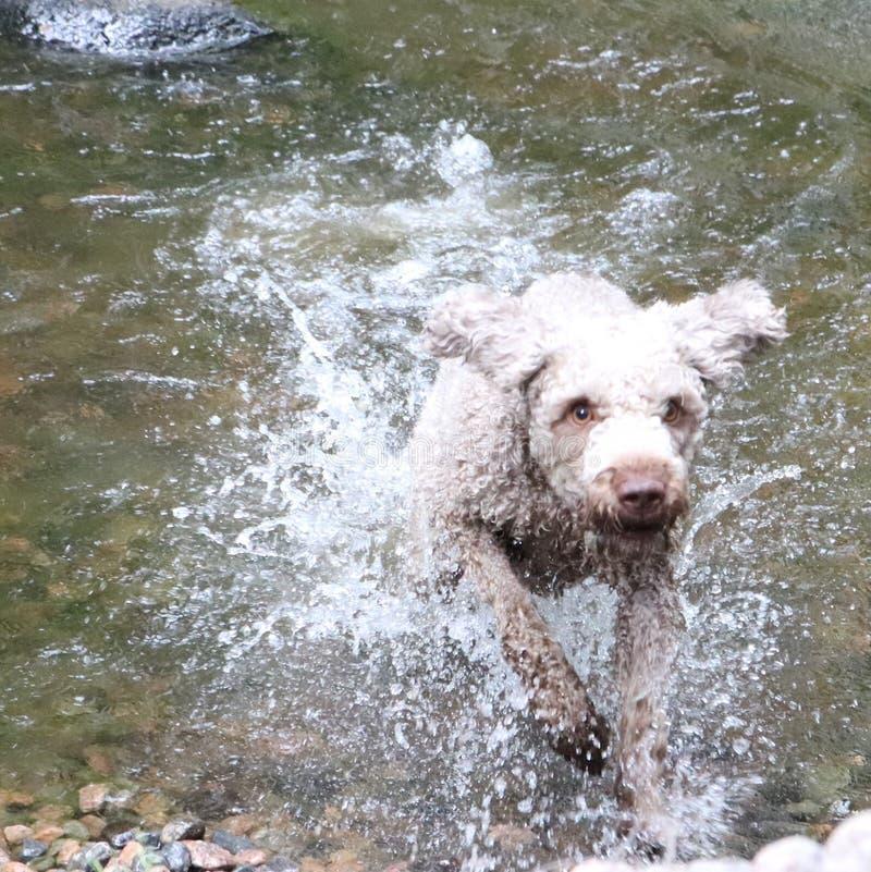 Um cão que espirra na água em um dia de verão imagens de stock