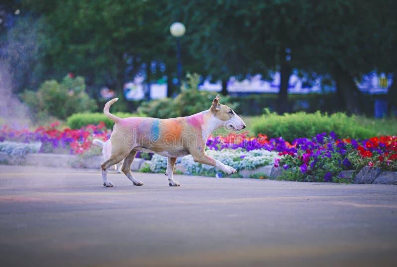 Um cão que tem o divertimento com pinturas do holi imagem de stock royalty free