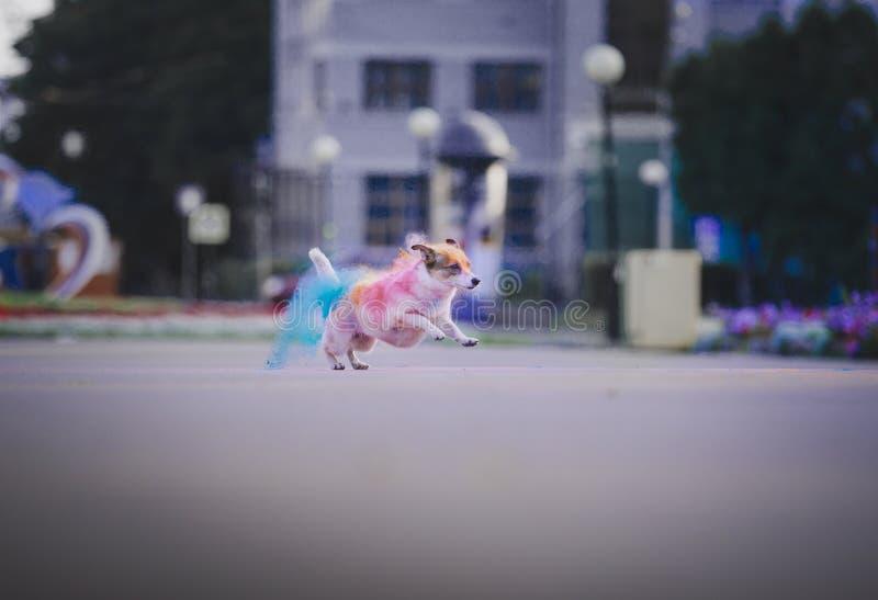 Um cão que tem o divertimento com pinturas do holi fotografia de stock