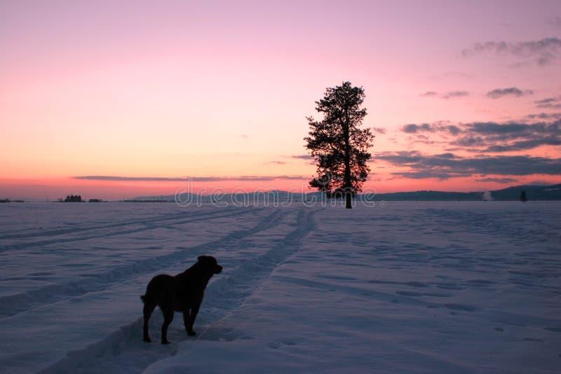 Um cão, uma árvore, e o por do sol. foto de stock