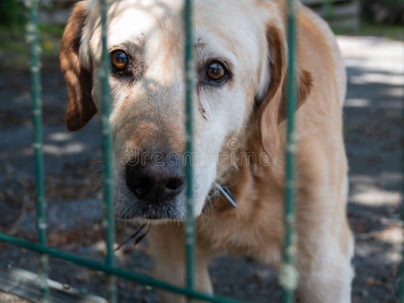 Um cão velho do híbrido olha tristemente através da grelha de um abrigo animal imagens de stock royalty free