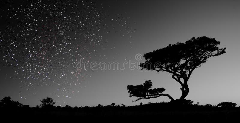 Um céu completamente das estrelas