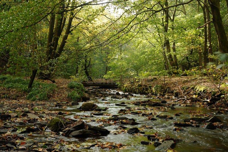 Um Córrego Da Queda Foto De Stock