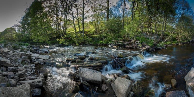 Um córrego pequeno com as cachoeiras nas madeiras imagem de stock royalty free