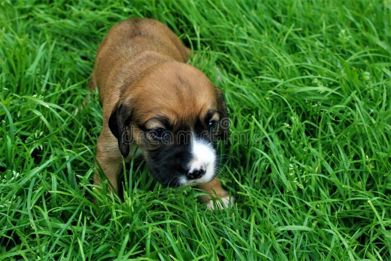Um cachorrinho pequeno na grama imagens de stock royalty free