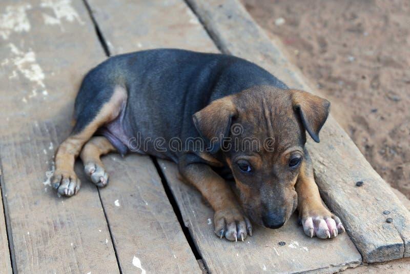 Um cachorrinho pequeno sonolento bonito imagens de stock
