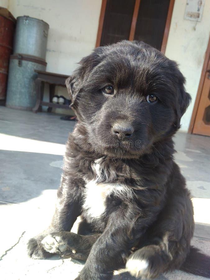 Um cachorrinho preto imagem de stock royalty free