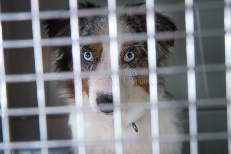 Um cachorrinho triste da libra fotografia de stock